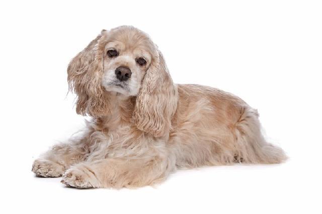 otite-canina-cuidados