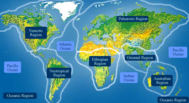 regioes-biogeograficas