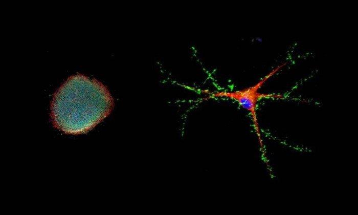 envelhecimento celular