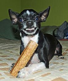 mostrando os dentes